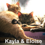 Kayla and Eloise were adopted from the Cat House and Adoption Center on Saturday, October 8, 2016.<br /> <br /> Eloise and Kayla<br /> <br /> Little girls awaiting a new life.<br /> <br /> From filth and foodless to room service with a smile. Bonded and sweet, these two girls are ready to take on their next adventure and find their own home. Do you want to give a new life?