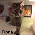 Fiona was adopted from the Cat House and Adoption Center on Saturday, January 17, 2017.