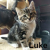 Luke was adopted from his foster home at Steamboat Animal Hospital on Wednesday, June 21, 2017.