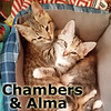 Alma and Chambers were adopted from the Cat House and Adoption Center on Saturday, July 8, 2017.<br /> <br /> Chambers and Alma<br /> <br /> Two peas in a pod.<br /> <br /> Racing up the vine to see who can get there first! Active and adorable, Chambers and Alma adore each other and can't wait to share their adoration with you.