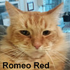 Romeo Red was visited at the Cat House and Adoption Center on Saturday and went to a new home on Sunday, December 4, 2016.