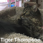 Tiger Thompson was adopted from the Cat House and Adoption Center on Monday, October 31, 2016.