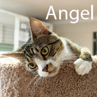 Angel was adopted from the Cat House and Adoption Center on Sunday, November 27, 2016.<br /> <br /> Angel<br /> <br /> Her halo is glowing.<br /> <br /> Cute and adorable, Angel is ready for a forever home and a place where she can rule with her feminine ways. She is hoping for windows to sit in with birds to watch a soft spot to curl up in and a loving human.
