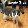 Louie Grey and Helen Grey (father and daughter, both blind) were adopted from the Cat House and Adoption Center on Saturday, November 5, 2016.