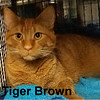 Tiger Brown and Bella Brown were adopted from the Cat House and Adoption Center on Saturday, January 21, 2017.<br /> <br /> Tiger Brown and Bella Brown<br /> <br /> Just big kittens!<br /> <br /> Life was interrupted and these two adorable 9 month olds are looking for a new home. Are you ready for some snuggle time, fun time and laughter? Add love and life to your home with Tiger and Bella.