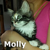 Molly and Peanut were adopted together from the Cat House and Adoption Center on Saturday, June 17, 2017.