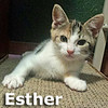 Pantusso and Esther were adopted together from their foster home at Hawks Prairie Veterinary Hospital on Wednesday July 12, 2017.