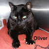 Oliver was adopted from the Cat House and Adoption Center on Saturday, March 31, 2018.