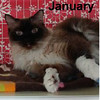 January was adopted from the Cat House and Adoption Center on Saturday, February 4, 2017.<br /> <br /> January<br /> <br /> Miss January<br /> <br /> With all her grace and poise, this lady wants to reign over your domain and bless you with her presence. Jannie would do well in a quiet home, observation towers and a warm lap or blanket where she can snuggle.