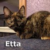 Etta was adopted from the Cat House and Adoption Center on Saturday, March 11, 2017.<br /> <br /> Etta<br /> <br /> Award winner<br /> <br /> She can talk the talk as well as she walks the walk. Etta sashays around and let's the toys know who's boss. She has a soft side too and is not afraid to show it once she gets to know you.