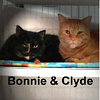 Bonnie and Clyde (siblings) were adopted from the Cat House and Adoption Center on Saturday, February 18, 2017