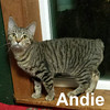 Dawson and Andie were adopted from their foster home on Sunday, October 30, 2016.