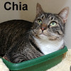 Chia was adopted from the Cat House and Adoption Center on Wednesday, December 21, 2016.
