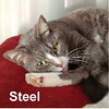 Steel was adopted from the Cat House and Adoption Center on Saturday, May 28, 2017.