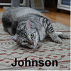 Johnson was adopted from the Cat House and Adoption Center on Saturday, January 28, 2017.