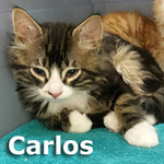 Carlos and Pete were adopted together from Steamboat Animal Hospital on Tuesday, June 13, 2017.