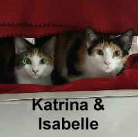 Katrina and Isabelle were adopted from the Cat House and Adoption Center on Saturday, May 20, 2017.<br /> <br /> Katrina and Isabelle<br /> <br /> Girls just want to have fun!<br /> <br /> Every teenage girl is ready to take the world by storm and these two darlings are ready to do just that. Sit back and watch the endless fun and entertainment of these two young kitties and new life will be brought to your home.