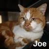 Joe was adopted from the Cat House and Adoption Center on Saturday, December 17, 2016.<br /> <br /> Joe<br /> <br /> Smokin' hot.<br /> <br /> Joe is a big lovable guy that is so grateful for meals on wheels and a warm snuggly blanket. Yes, there is a Santa Claws! This very handsome gentleman was on his own and thought to be feral (which he is NOT) because he was roaming in a neighborhood for over two years. Lucky for him, he took a chance and rubbed against the leg of one of the kind people caring for him and she called to get him indoors and looking for a real home. Santa, please bring Joe a home for Christmas.