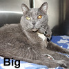 Big was adopted from the Cat House and Adoption Center on Thursday, November 3, 2016.<br /> <br /> Big<br /> <br /> Mr. Big to you.<br /> <br /> Big is a very handsome and large guy that wants to have a human again. He is very sweet and loving with an over-bite that makes him extra charming.