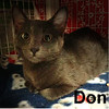 Dusk and Don (brothers) were adopted from the Cat House and Adoption Center on Saturday, January 7, 2017.