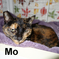 Mo was adopted from the Cat House and Adoption Center on Saturday, December 10, 2016.<br /> <br /> Mo<br /> <br /> Mo better.<br /> <br /> Having a good indoor life again would make things better. Mo's owner passed and she was left outdoors to be cared for by neighbors. She is a very sweet lady with the desire to have conversations, a warm lap and love.
