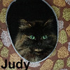 Judy and Doralee (sisters) were adopted from the Cat House and Adoption Center on Saturday, July 1, 2017.<br /> <br /> Judy<br /> <br /> Resilient and resourceful.<br /> <br /> Judy and her friends were forced to move along when their caretakers were evicted and they were left behind. Luckily her nose led them to a kind soul just down the road who took pity on them with a meal and temporary roof. This beautiful girl is ready and waiting for a permanent place to call home.