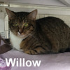 Willow was adopted from the Cat House and Adoption Center on Saturday, March 18, 2017.