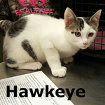 Hawkeye was adopted from his foster home at Healthy Pets Animal Hospital on Monday, January 23, 2017.