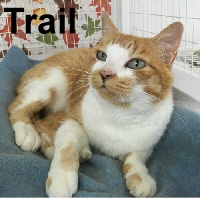 Trail was adopted from the Cat House and Adoption Center on Saturday, December 10, 2016.<br /> <br /> Trail<br /> <br /> Happy Trails!<br /> <br /> A young boy, named Trail, helped his mom coax this handsome guy out of the edge of the property and into their home. Trail, the cat, is very sweet and loving and wants no more than to have a human love him.