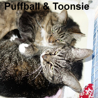 Puffball and Toonsie were adopted from the Cat House and Adoption Center on Saturday, November 26, 2016.<br /> <br /> Puffball and Toonsie<br /> <br /> Priceless pair.<br /> <br /> These girls have been together since birth and simply love each other and anyone who has love to give. Bonded sisters that seem to like each other's company better than anything else, yet offering them your kindness makes them equally as happy. Do you need a little Puffball and Toonsie in your life?