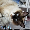 Gypsy was adopted from the Cat House and Adoption Center on Tuesday, June 20, 2017.