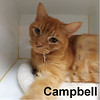 Campbell was adopted from Steamboat Animal Hospital on March 15, 2017.