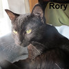 Rory was adopted from his foster home on Sunday, April 8, 2018.