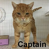 Captain was adopted from the Cat House and Adoption Center on Saturday, March 18, 2017.<br /> <br /> Captain<br /> <br /> Toot toot!<br /> <br /> He's weathered the storm like a Captain and he is done with dealing with the winds, rain and cold weather. This Captain is hanging up his cap and ready to be ashore. Land ho and waiting for a home.