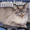 Jackie Frost was adopted from the Cat House and Adoption Center on Saturday, January 28, 2017.