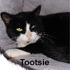 Tootsie was adopted from the Cat House and Adoption Center on Saturday, April 14, 2018.<br /> <br /> Tootsie<br /> <br /> Trapped and tame.<br /> <br /> Left behind, although a special guy could not leave her abandoned. Daily trips to feed and capture, Tootsie managed to finally get caught and to the vet. She's a shy girl with a big heart and truly wants love and attention. Do you have room for a special girl?