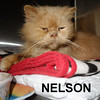 Nelson was adopted from the Cat House and Adoption Center on Saturday, November 26, 2016.