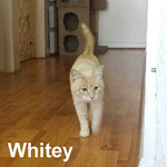 Whitey was adopted from the Cat House and Adoption Center on Tuesday, October 25, 2016.