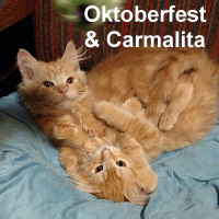 Oktoberfest and Carmalita October (brother and sister) were adopted from their foster home at Steamboat Animal Hospital on Wednesday, November 23, 2016.