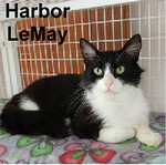 Harbor LeMay was adopted from the Cat House and Adoption Center on Saturday, June 17, 2017.<br /> <br /> Harbor LeMay<br /> <br /> Gentle lady.<br /> <br /> Lost, trapped, scared, and hungry. Food was the deciding factor that got her to trust and want the attention that she deserved. Harbor is a darling little lady that is affectionate and loving.