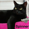 Spinner and Tux (sister and brother) were adopted from the Cat House and Adoption Center on Saturday, May 13, 2017.<br /> <br /> Spinner and Tux<br /> <br /> New beginning, new life.<br /> <br /> Unfortunately they are looking for a home due to the sudden death of their human caregiver. This brother and sister are ready for security of a new home and give all they got to make sure that you are just as happy with them as they will be with you.
