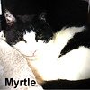 Myrtle was adopted from the Cat House and Adoption Center on Saturday, April 7, 2018.<br /> <br /> Myrtle<br /> <br /> Myrtle Moo.<br /> <br /> She finds comfort in a warm spot, lounging as the sun goes down or curled up next to you in a recliner and Myrtle would be happy. Life on the streets and surfing the garbage cans is all in the past and she seems to want quality quiet time and a soft spot of her own.