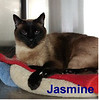Jasmine was adopted from the Cat House and Adoption Center on Saturday, January 7, 2017.
