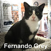 Fernando Grey was adopted from the Cat House and Adoption Center on Saturday, October 22, 2016.