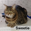 Sweetie was adopted from the Cat House and Adoption Center on Friday, April 21, 2017.