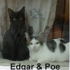 Edgar and Poe (brothers) were adopted from the Cat House and Adoption Center on Saturday, March 18, 2017.<br /> <br /> Edgar & Poe<br /> <br /> Book ends<br /> <br /> Ready for a new beginning! Smart, sweet and soulful, Edgar and Poe will fill your world with wonder and amaze you with their purrfect prowess