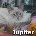 Jupiter was adopted from the Cat House and Adoption Center on Saturday October 8th 2016.