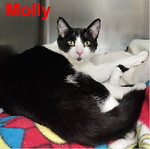 Molly was adopted from Steamboat Animal Hospital on Wednesday, April 12, 2017.