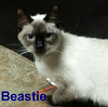 Beastie was adopted from his foster home at South Bay Animal Hospital on Tuesday, April 18, 2017.