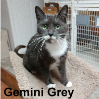 Gemini Grey was adopted from the Cat House and Adoption Center on Saturday, October 29, 2016.